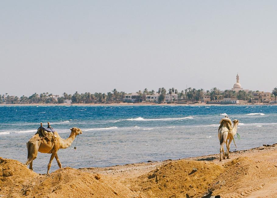 ahhfred - egypt-dahab-25
